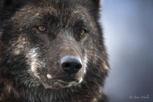 Molly Wolf Jana Malin