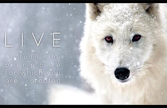 Wolfkodex by Jana Malin